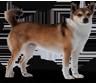 Dogslines.com